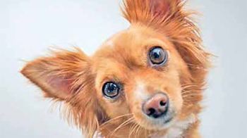 Проблемы со здоровьем, которые могут вызвать нарушения поведения у собак