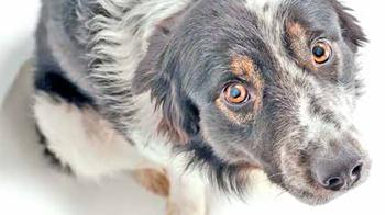 Дрессировка собак: некоторые мифы и реальность