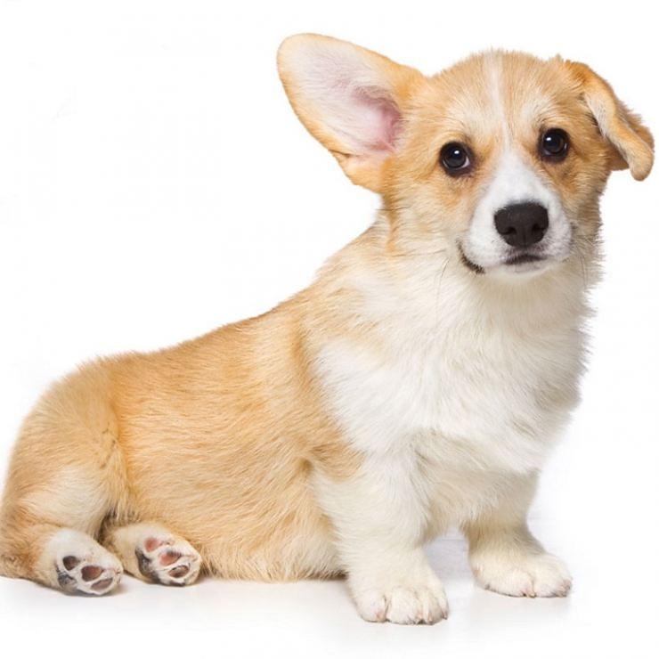 Если ваша собака научилась говорить, то это еще не значит, что вы сошли с ума